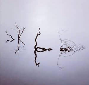 art lac